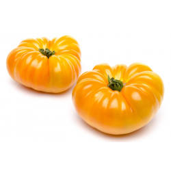 TOMATE JAUNE ANANAS FRANCE LE KG