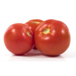 TOMATE RONDE CAL.18 (+-330GR) X 6 KG MAROC
