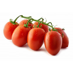 TOMATE DATTERINO GRAPPE 15/25 ITALIE KG