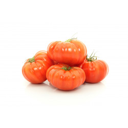 TOMATE MARMANDE PAYS FRANCE LE KG